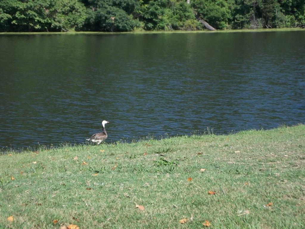 Oak Valley Wildlife